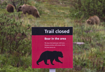 sign says trail closed bear in area, behind the sign, bears are seen