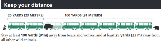 keep your distance Stay at least 100 yards (91m) away from bears and wolves, and at least 25 yards (23 m) away from all other wild animals.