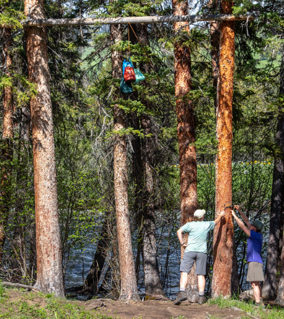 two people tying a rope around a tree trunk. The rope leads to bags hanging from a horizontal pole overhead