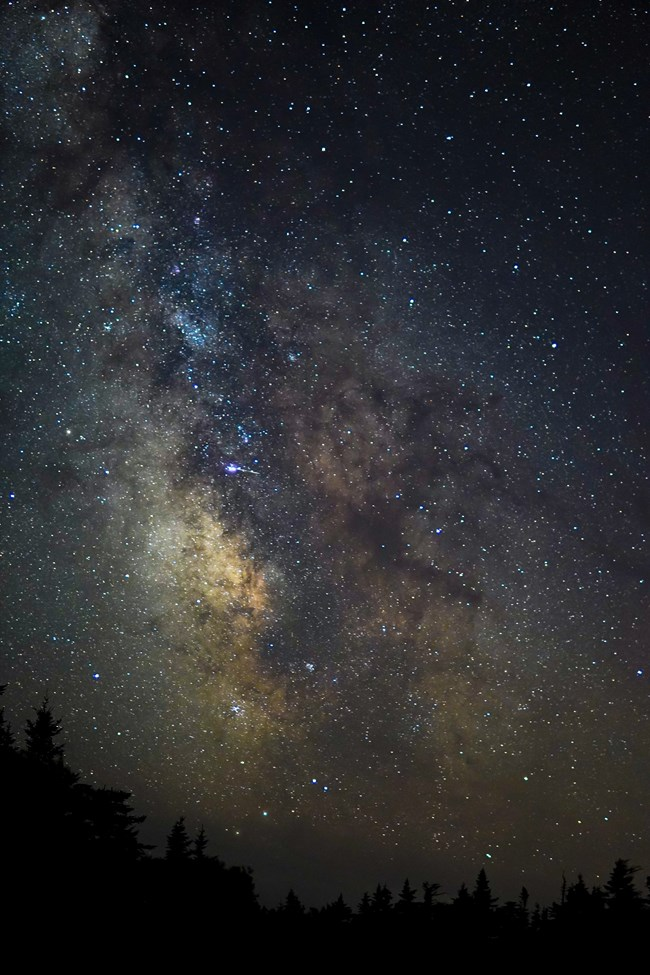 Milkyway above row of pines