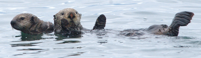 nps photo sea otter and pup