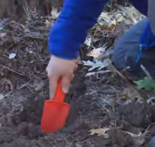 digging a hole with a garden tool