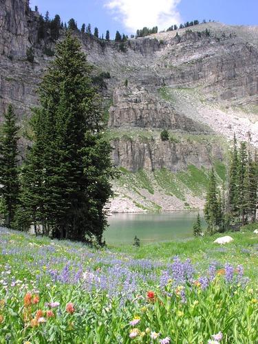 wildflowers in foreground, lake behind