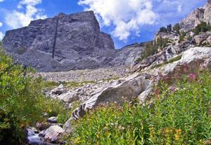 meadow and peak