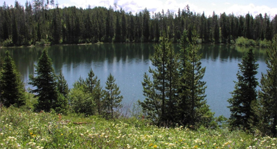 lake ringed by forest