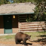 bear on cabin walkway