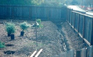 ditch with plants ready to put into ground