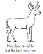 drawing says Mule deer travel to find the best weather