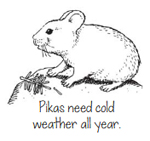 drawing says Pikas need cold weather all year