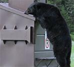 bear leaning on dumpster
