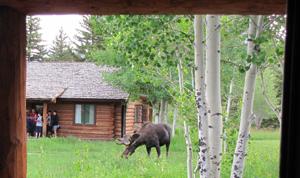 moose from porch at Dornan's